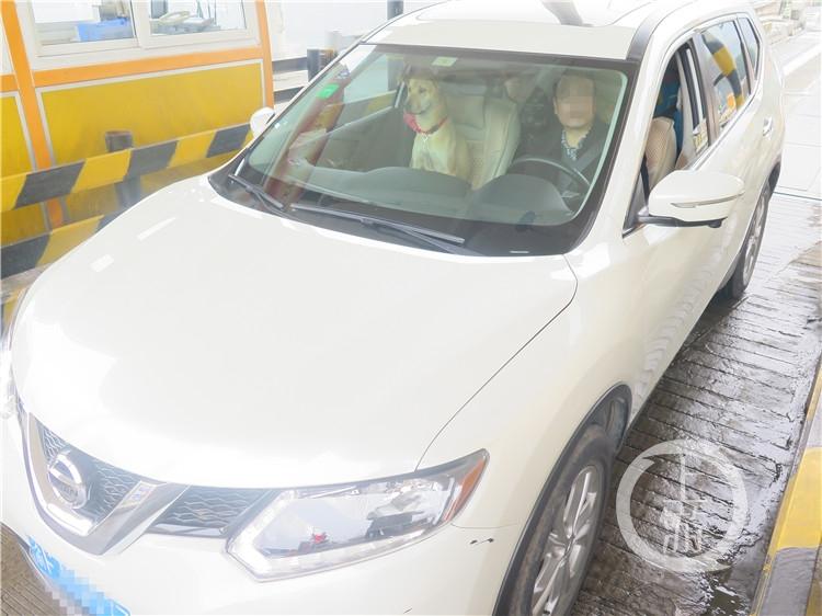 狗坐在副驾驶座上。