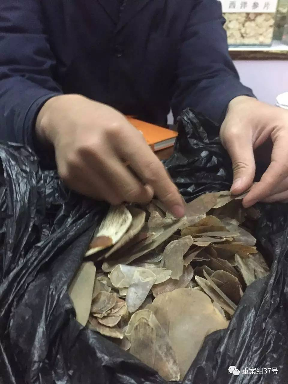 菊花园中药材交易市场,一名店铺员工从办公桌底拿出穿山甲鳞片给记者看。