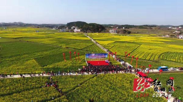 双峰举办第七届油菜花文化旅游节
