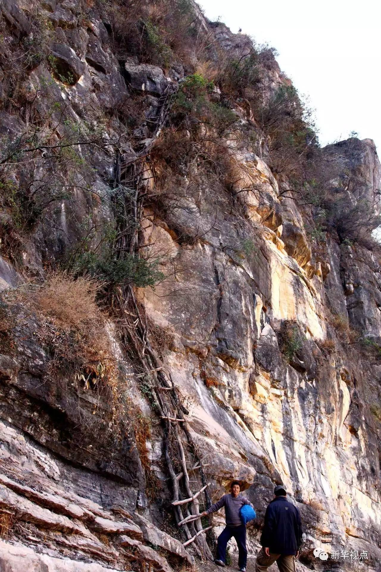 2013年2月22日拍摄的藤梯(阿克鸠射摄)