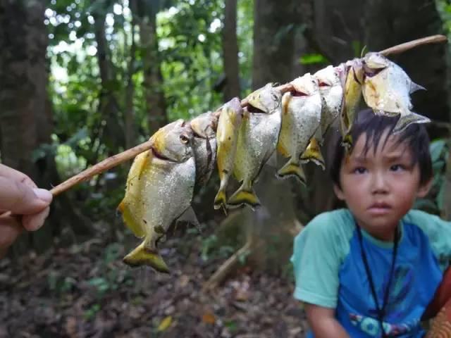 ▲在亚马孙森林里钓食人鱼吃。
