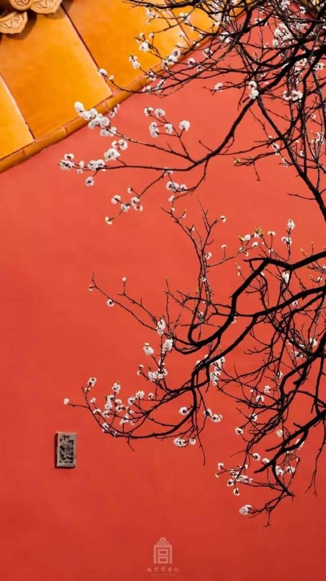 一场春风,让故宫穿越回到了紫禁城,美到心醉……