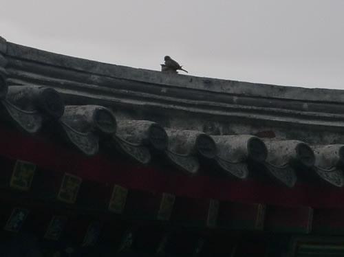 """""""麻雀哥""""张帅欢乐的北京都市生活(三)"""