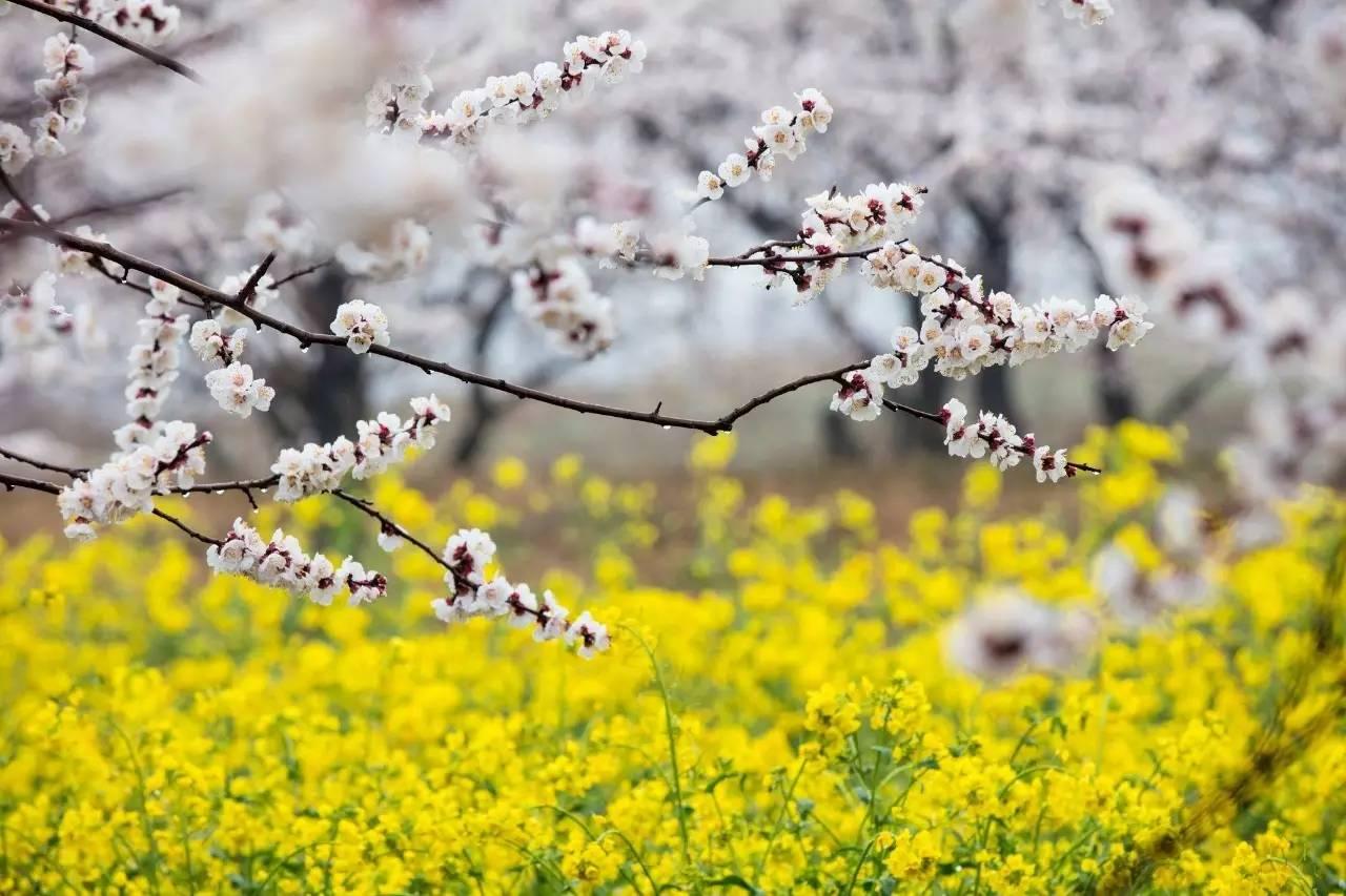 面朝阳光,春暖花开