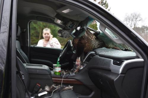 幸运的是,此事没有引发交通意外,车上的人只受了轻伤。(图片来源:美联社)