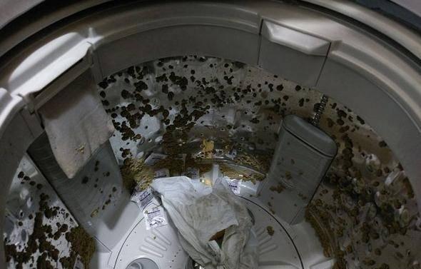 网友家的喵星人太贪吃,没想到因为偷吃毁了一台洗衣机...