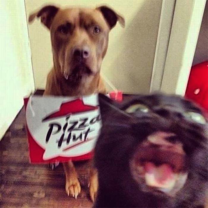 """猫:""""我才是主角!唯一的!"""""""