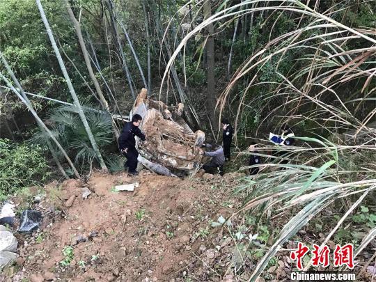 车辆翻落山崖,卡在一片竹林里 周正勇 摄