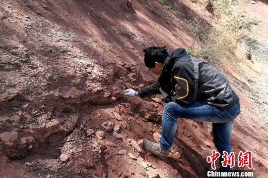 图为郭文伟博士在进行遗迹化石观察和测量。 田力 摄