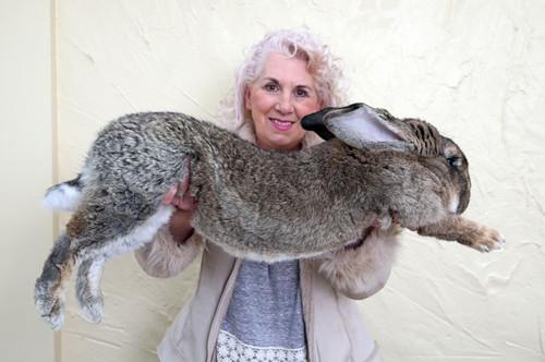 """饲养专家安妮特·爱德华斯(Annette Edwards)表示,西蒙在被放入机舱时""""非常健康。"""""""