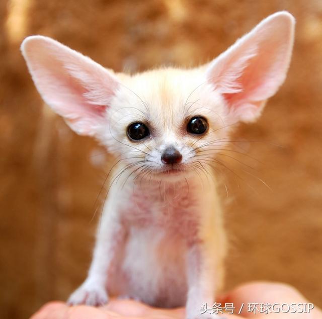 呆萌的可爱的动物宝宝照,具有超强治愈力,萌化你心,感悟美好