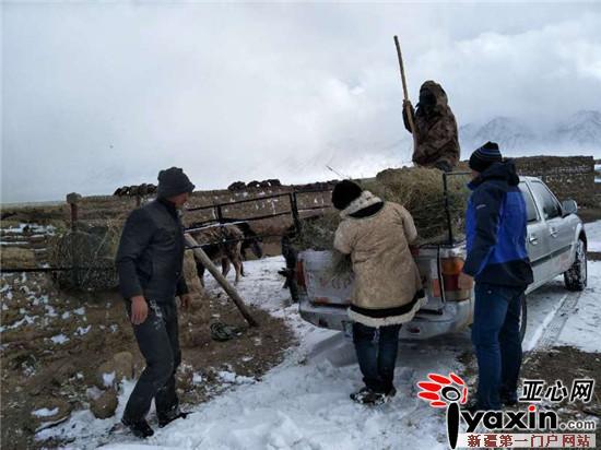 新疆和布克赛尔县驻村工作队冒着暴风雪为民找回丢失的羊群
