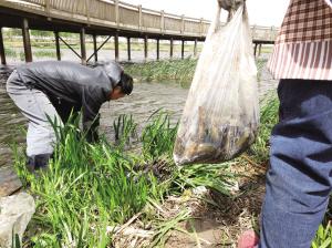 十万尾泥鳅鱼刚被放进河 路人纷纷捕捞要进锅