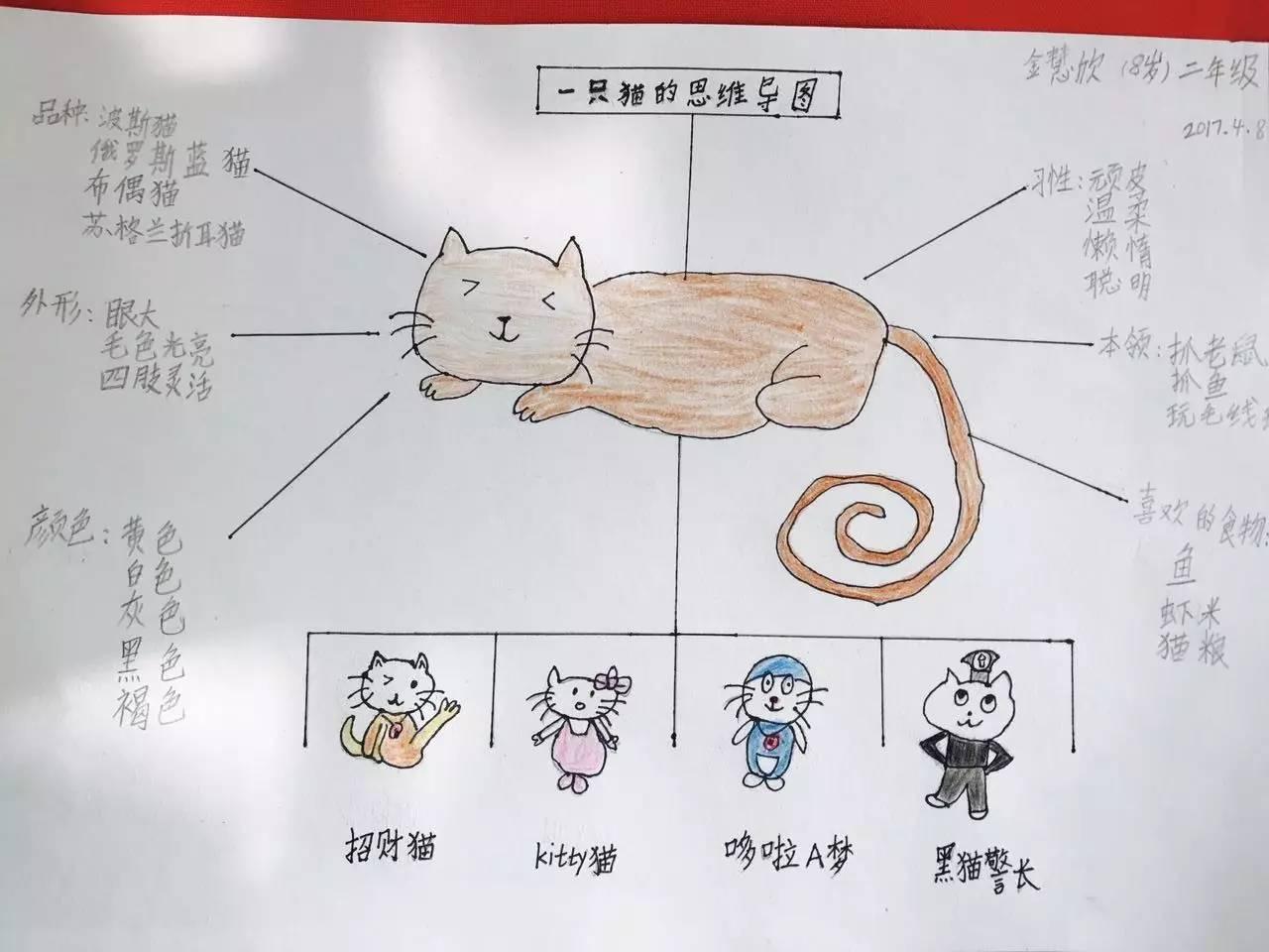 作品《一只猫的思维导图》来自傲梦学员金慧欣   由一只猫还能联想