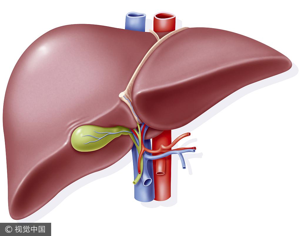 """每天吃上一小把 赶快给肝脏做个""""大扫除"""""""