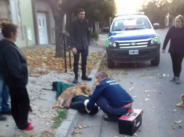 阿根廷忠犬守护摔伤主人不离不弃 直到主人获救(图)