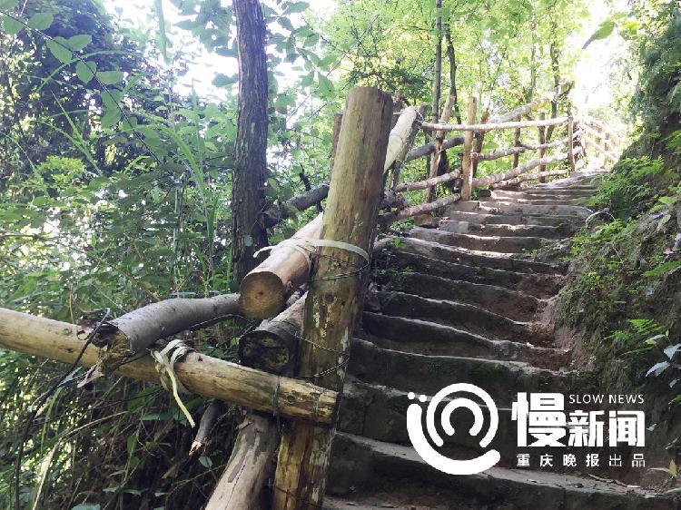 道路护栏的木头都是张继文一根根扛过来的