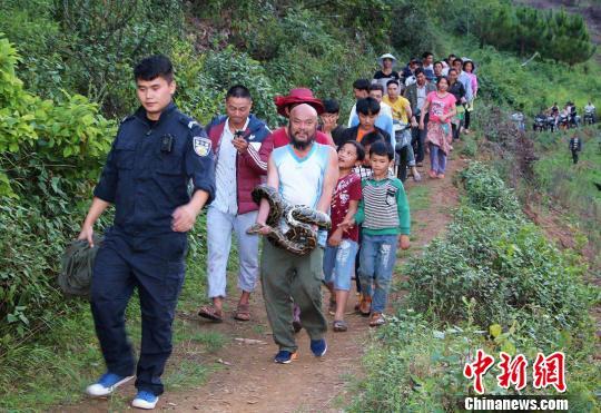 图为国家一级保护动物缅甸岩蟒被众人捕获。 范学伟 摄