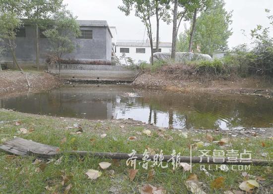 水塘边杨曼曼救人时用的木锨仍在。