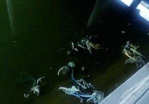 光明桥附近护城河开闸放水,多辆共享单车露出水面。图片来自网络