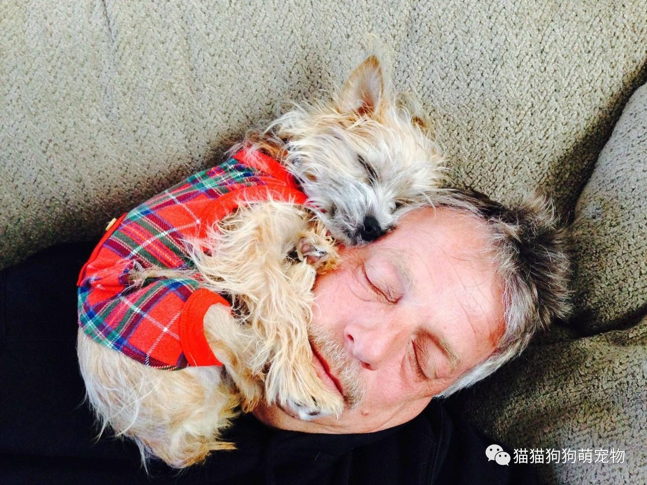我爸爸说他不想要一只狗