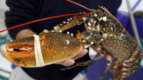 资料图:龙虾。图片来源:法新社