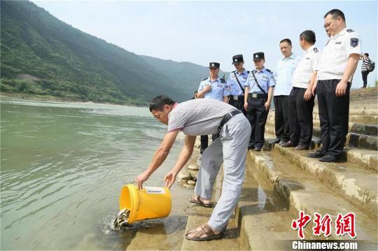 禁渔期电鱼获刑的贾某某在相关部门见证下向嘉陵江放流鱼苗。 高志农 摄
