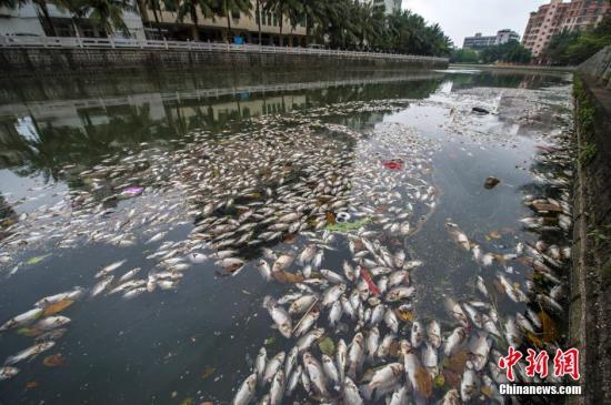 资料图:2014年4月4日,位于海南省海口市振兴南路美舍河一号桥处泛起大面积死鱼,形成条带状,在河面延伸超一公里长,并散发腥臭味。中新社发 骆云飞 摄
