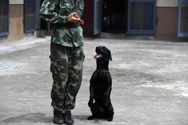 网红警犬的特殊葬礼:战友为它垒坟鸣枪13发送行