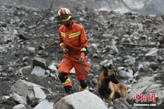 6月25日,消防职员领导搜救犬睁开救援。6月24日,四川茂县叠溪镇新磨村新村组富贵山山体垮塌,大批救援职员正在现场全力睁开搜救等事情。 绵阳消防 供图