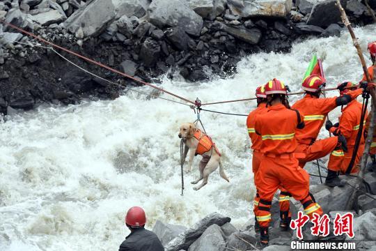 搜救犬通过绳桥渡河,场面惊险。 安源 摄