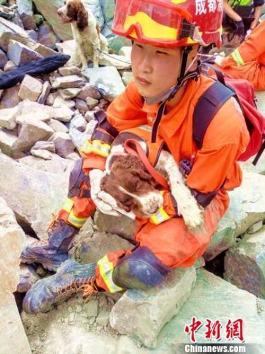 """搜救犬""""西岭""""在消防战士怀中睡着。 王鹏 摄"""