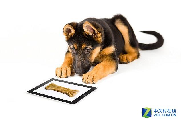 人不如系列!狗都有自己用的平板电脑了