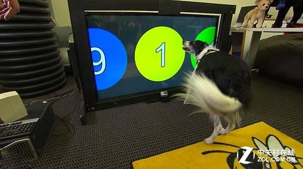 狗狗能通过识别颜色进行交互