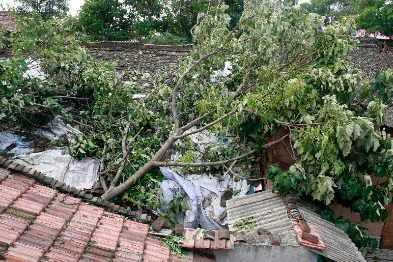 遭暴雨、冰雹袭击 蓝田多镇农作物受损严重
