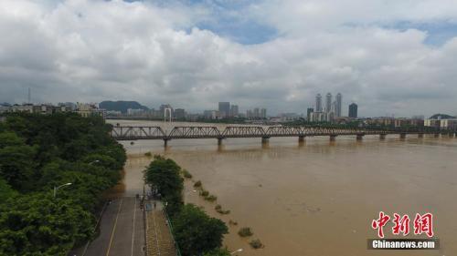 材料图:7月3日,因受连日暴雨影响,广西柳江河柳州段呈现超警惕水位。王以照 摄