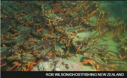 视频截图。 来源:ROB WILSON/Ghost Fishing NZ