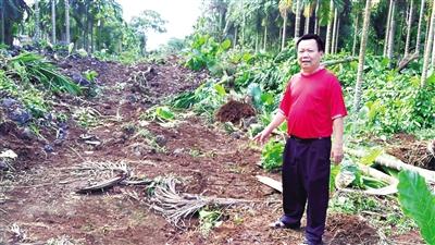 村民举报一些无主坟墓造假,里面根本是空的。
