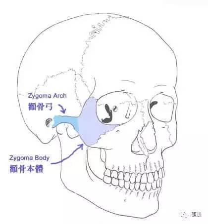 鼻下点的位置,中庭长的人通常面相上看起来会比较成熟,中庭偏短的