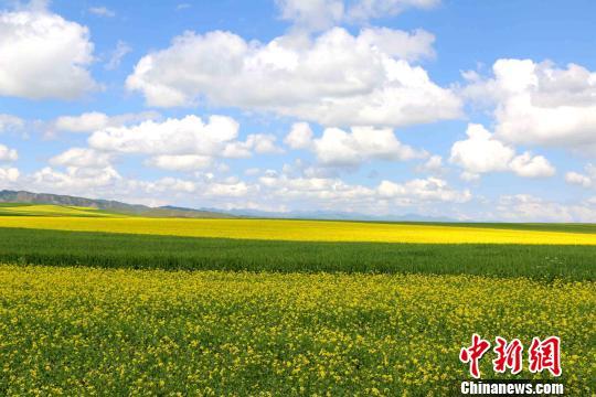 青海大部开启晴热高温模式 避暑夏都接受炎烤
