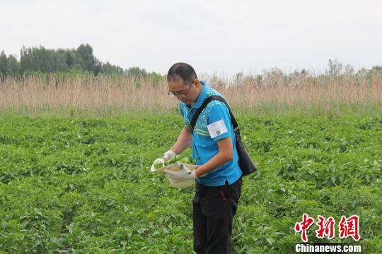新疆兵团蔬菜采摘园进入采摘季 游客纷至沓来(