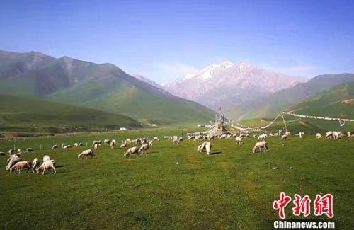 材料图:七月的祁连山下。郎文瑞 摄
