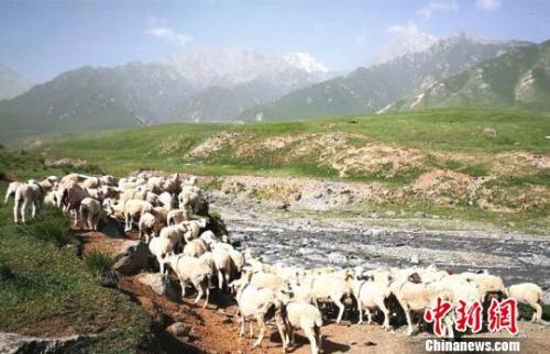 资料图:夏日的祁连山风景如画。 郎文瑞 摄