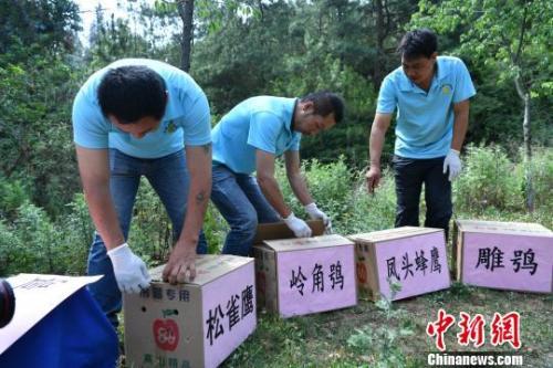 资料图:云南省野生动物收容拯救中心工作人员准备放归野生动物。 任东 摄