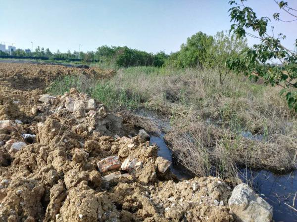 中央第四环保督察组现场督察发现正在被损毁的巢湖滨湖湿地。