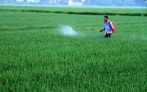 农业部:台风频发致秋粮病虫害加剧 防控形势严峻