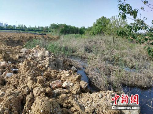 中央第四环保督察组现场督察发现正在被损毁的巢湖滨湖湿地。 环保部供图