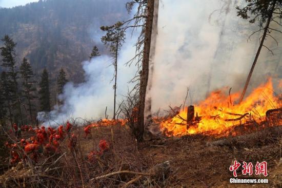 上半年中国森林火灾呈高发态势