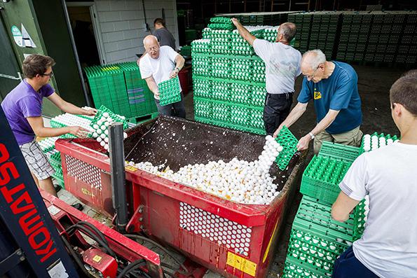 """荷兰""""毒鸡蛋""""事件发酵,家禽饲养场的农民扔掉鸡蛋。视觉中国 图"""