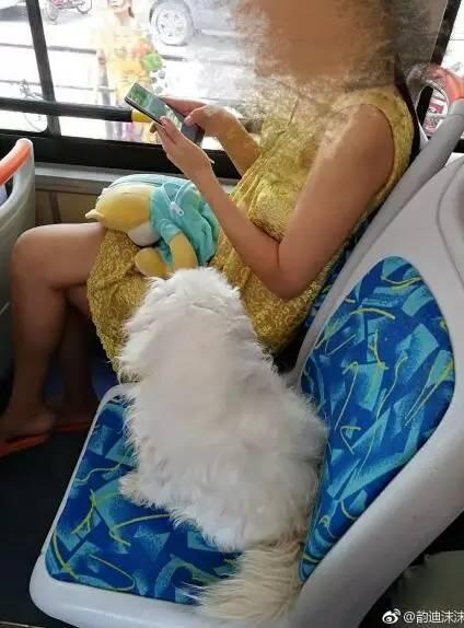 """""""狗累了必须坐着!""""公交车里站满人狗主人就不让座!"""